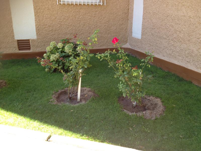 Plantas en jardin