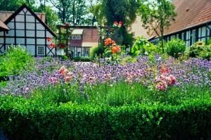 limpieza-jardin